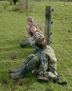 four children waiting to watch a calf emerging from a cow