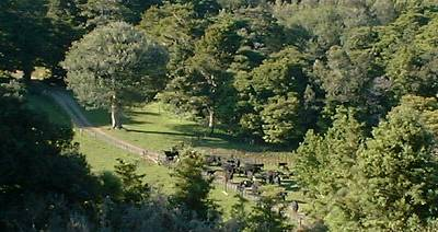 view of the cattle in the yards from the hill opposite