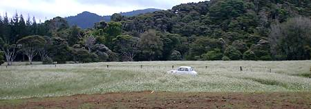 Small car in a large field