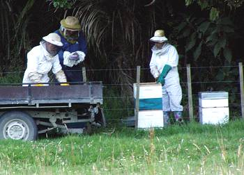 working with bee-hives
