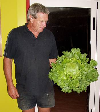 Stephan and his fresh lettuce