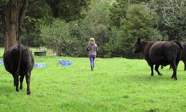 Ella carrying molasses to the heifers