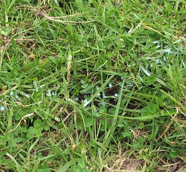 milk trail on the grass