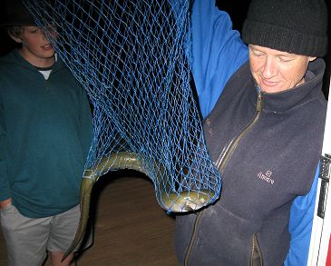 eel in a net