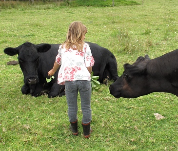 Stella offering treats to cows