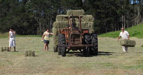 picking up hay
