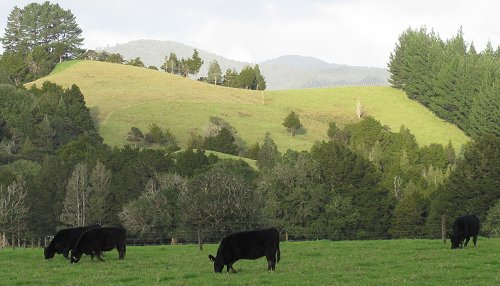 grazing pattern on hill paddock