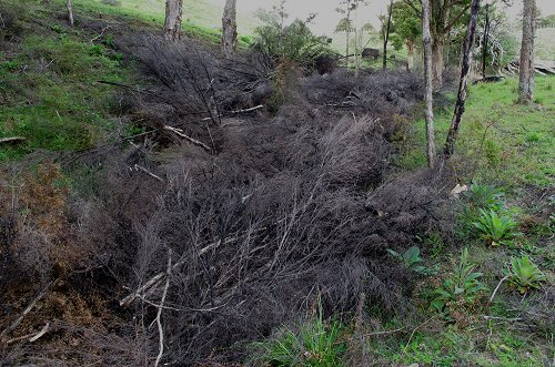 gully filled with tree prunings