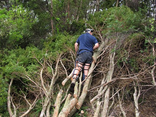Stephan looking for a Tui nest