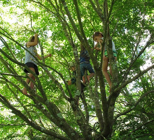 children climbing in a tree
