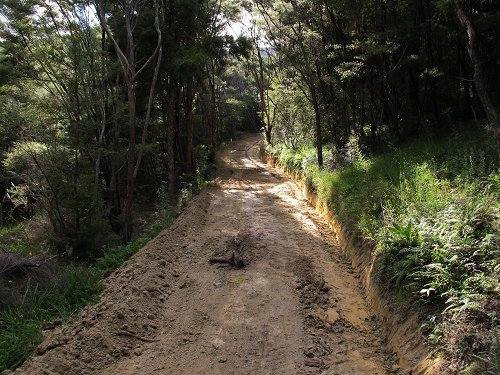 track through scrub