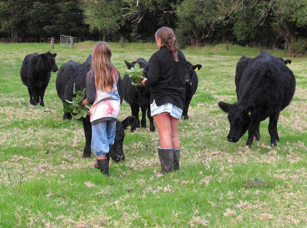 girls and young cattle