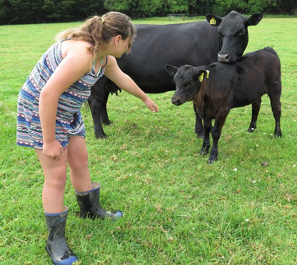 girl and Angus cattle