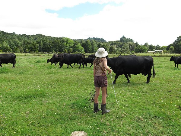 girl helping with cattle