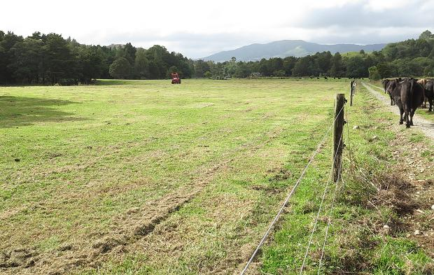 mowing a paddock