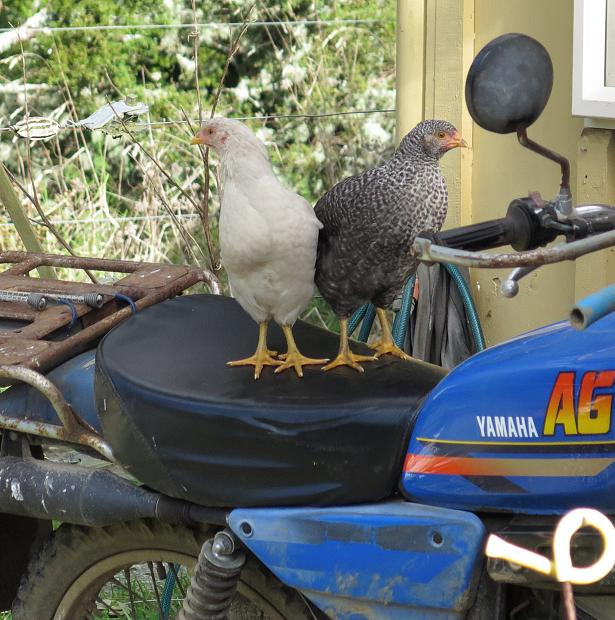 chicks on a motorbike