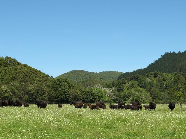 clear day and cattle