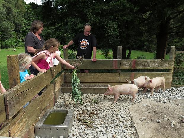 children looking at pigs