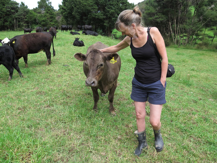 woman and cows