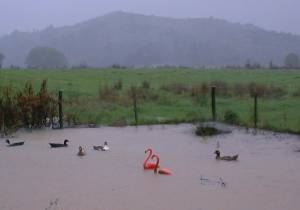 flooding in the duck pen