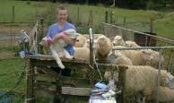 docking the lambs