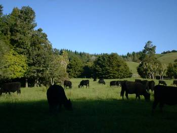 happy cows grazing