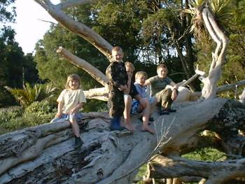children on the fallen Puriri tree